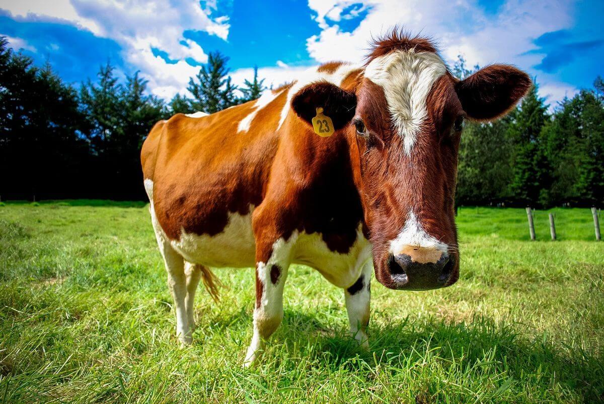 Die kuh kriegt meine Kinder nicht gesammelte Sprueche stiefmutterblog